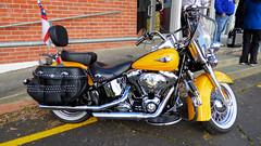 Glen Eden, West Auckland, New Zealand (Sandy Austin) Tags: panasoniclumixdmcfz70 sandyaustin gleneden auckland westauckland northisland newzealand glenora harleydavidson motorcycle yellow