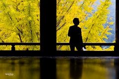 "Japan-2b-038-Miyajima - Senjôkaku (david ""Djannis"") Tags: contrejour personne arbreaux40écus ginkgobiloba tree arbre bois temple monument 広島 hiroshima 日本 japan japon 鳥居 宮島 miyajima senjôkaku pavillon automne autumn"