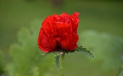 Flower! (Nina_Ali) Tags: nina ali ninaali