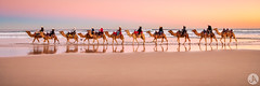 Camels at Dusk (John_Armytage) Tags: nelsonbay portstephens birubibeach beach camels camelride photographytours nisifilters nikond850 tamron1530 pano panorama panoramic australia sunset dusk nsw landscape