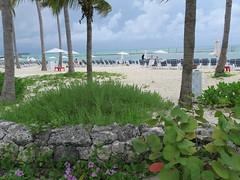 IMG_4632 (Man O' World) Tags: baha mar nassau bahamas beach turtle resort