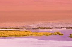 Colors of the desert (amrocha) Tags: 2017 atacama chile pentax desert deserto ferias montanhas mountains travel viagem desierto travelphotography colors landscape landscapephotography montañas andes losandes cordilleradelosandes andesmountains