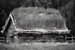 IMG_1076 (www.ilkkajukarainen.fi) Tags: barn lato välimaa tanariver tenoriver lapland sirma nuorgam finland finlande eu europa scandinavia blackandwhite mustavalkoinen monochrome visit travel traveling happy life puu wood carving grass roof ruoho katto summer kesä 2018
