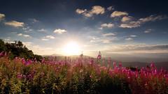 Morgens auf dem Hochblauen (Chrisgraphy) Tags: schwarzwald hochblauen sunrise sonnenaufgang