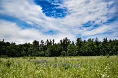 nature reserve (MariaMargy) Tags: outdoors outside ontario canada nature landscape sky clouds grass trees green blue color colour alliston hiking hikes hike