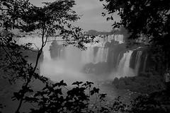 Iguazú Falls (mavricich) Tags: cataratas falls monocromo monocromático misiones argentina agua arte árbol sol sombras iguazú naturaleza cielo cascada parque neblina