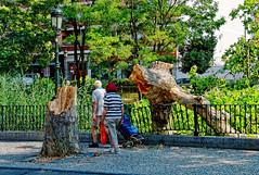 La furia del viento (juanmzgz) Tags: zaragoza tormenta clima árbol