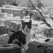 Cat amongst the ruins
