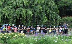 Extracurricular Lesson (seiji2012) Tags: 東村山市 北山公園 花菖蒲 花しょうぶ higashimurayama teacher class pupil student