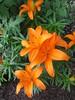 IMG_1160 (cathead77) Tags: mercercounty westvirginia wv princeton chilis