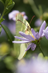 DN9A4597 (Josette Veltman) Tags: garden tuin tuinfoto groen natuur nature garten jardin flowers bloemen