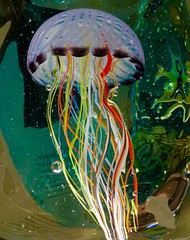 Jelly Glass (Outlaw_Pete) Tags: italy venice jellyfish colour murano art glass