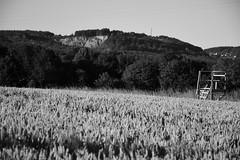 DSC_3572 (Gernot Grebe) Tags: westerwald getreide weizen schwarzweis bw hochsitz landschaft steinbruch quarry perch wheat