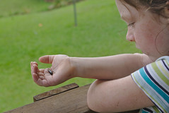 Talia loves moths and all things related to moths (eomer1) Tags: papua new guinea kids cocoon moths
