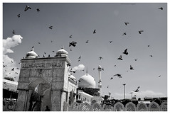 Srinagar, Kashmir. Romance in Srinagar (tej58) Tags: kashmir india indiapictures mosque srinagar bnw dslr nikonindia nikon streetphotography streetphotographyindia