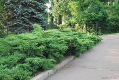Київ, Ботанічний сад імені Фоміна Ukraine InterNetri 07