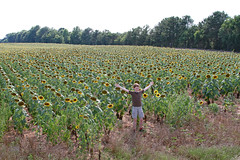 onthetraciksunfield (FAIRFIELDFAMILY) Tags: winnsboro train depot station granite blue fairfield county sc south carolina sunflower field jason taylor grant yellow pretty outside farm farming nature young old architecture stone brick building store town southern living garden gun fun flower flowers summer life boy warehouse