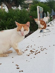 Cat feeding station in Pefkos... (deltrems) Tags: cat kitten pussy pussycat feral rhodes rodos greece greek island pefki pefkos pefkoi feeding feedingarea station