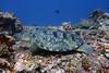 Turtles 9 (Petter Thorden) Tags: diving indonesia gili trawangan underwater turtle