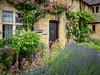 Mellowstone Cottage, Broadway (Bob Radlinski) Tags: cotswolds england europe gloucestershire uk travel broadway