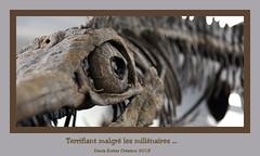 Terrifiant malgré les millénaires - Terrifying despite the millennia (Terra Pixelis) Tags: alsace hautrhin 68 dinosaure squelette fossile os nikond810 oeil dents