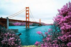San Francisco Dreamin' (Jack R. Seikaly Photography) Tags: san francisco bay area infrared ir multicolor canon golden gate bridge color fran photoshop jack seikaly jrseikaly photography digital art