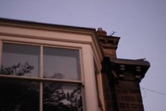 IMG_0629 (esmehs) Tags: reflection window house tress trees soft twilight dusk suburban suburbia outoffocus softfocus purple canon 50mm f18