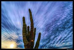 Saguaro Cactus (Ken Mickel) Tags: arizona clouds cloudscape cloudy desert estrellla goodyeararizona kenmickelphotography landscape landscapedesert outdoors sky backlighting backlightingphotography backlit backlitphotography nature photography goodyear unitedstates us