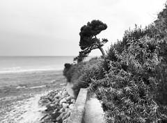 Juste en noir et blanc (François Tomasi) Tags: larochelle villedelarochelle françoistomasi monochrome noiretblanc blackandwhite justedutalent google flickr yahoo