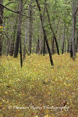 Pine Barrons (23) (Framemaker 2014) Tags: pine barrens wharton state park burlington county new jersey forest united states america