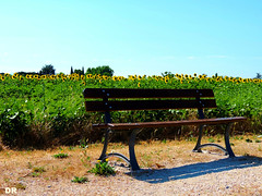 campagne fleurie (danie _m_) Tags: naturepic sunflowers countryside bench landscape flowers lovenature flowerspower nature tournesols banc campagne fleurs paysage