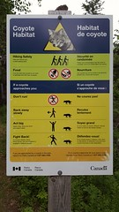 Coyote warning in Cabot Trail National Park. Coyotes & wolves breed with each other. New hybrid coywolf is not shy like  coyote. In 2009, a group of coywolfs killed a girl hiking on Skyline trail in Cape Breton, NS, Canada. (BasiaBM) Tags: