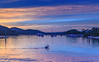 Pretty Sunrise and Pelican on the Bay (Merrillie) Tags: daybreak woywoy landscape nature australia pelican foreshore trees newsouthwales animal earlymorning nsw brisbanewater mangroves bird boats morning dawn coastal water sky waterscape sunrise centralcoast bay outdoors