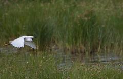 Rainham Marshes (lightrace) Tags: rainham marshes