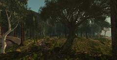 Gabes Forest ([ Annaluisa ]) Tags: sl secondlife nature landscape forest trees gabes gabesforest mainland unedited