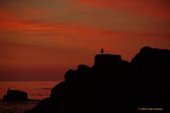 3KB05943a_C (Kernowfile) Tags: cornwall stives porthmeorbeach sky clouds gull silhouette water sea rocks