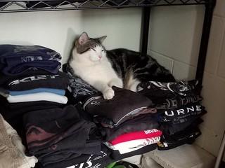 Kewpie: Papa's Closet Pt. 1