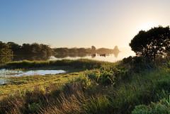 Bolinas Lagoon (fksr) Tags: bolinaslagoon stinsonbeach lateafternoon goldenhour landscape grass tree water pacificcoast marincounty california