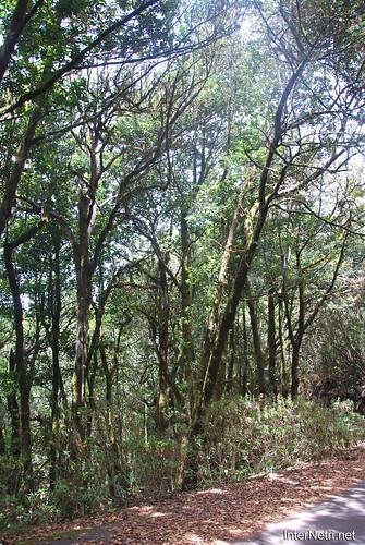 Національний парк Гарахонай, Гомера, Канарські острови  InterNetri  0710