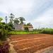 Garden plot in rural Vietnam