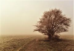 Misty Moor (guthrie79uk) Tags: tree hobmoor york mist winter moor yorkshire nature atmospheric
