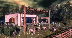 Put Out to Pasture (Decorizing) Tags: alpaca farm barn windmill grass allorahouse badunicorn jian granola con backbone kres af vagabond soy ddd omen littlefox fameshed uber swampoaktree milkcans rug 3wheelertruck springdaisiestruck dandesweetgrass mesh sl decor decoration fence