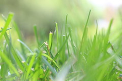 152/365 In the Tall, Tall Grass