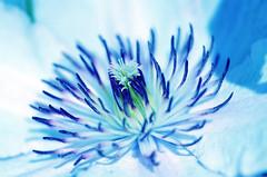 A floral creature... (Pensive glance) Tags: flower fleur plant plante