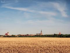 Greifswald's skyline (Thomas Heuck) Tags: greifswald skyline kirchen churches kornfeld grainfield himmelsky landschaft landscape stadt city olympus em1markii