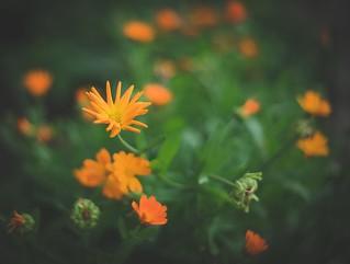 Aquarelle in orange
