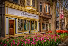 Downtown Holland #1 (Peeblespair) Tags: holland tuliptime michigan downtownholland mainstreet villageshopping tulips canterburycottage peeblespairphotography raelawsonstudios hollandpeanutstore