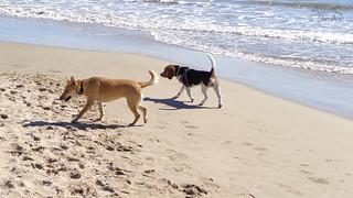Passejada per la platja