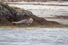 00 (dunraven48) Tags: birds northernireland sigma150500mm canon7d rspb wildlife
