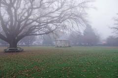 Foggy..... (flying-leap) Tags: newzealand northcanterbury nz southisland the4seasons nature 4winter winter rangiora fog park bandrotunda sony sonydscrx10m4 sonydscrx10iv sonyrx10iv rotounda